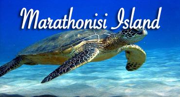 sea turtle zante 1